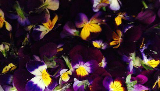 Zöldek, csírák, virágok – mikrozöldek a csúcskonyhákban