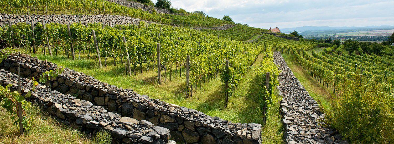 A Kreinbacher birtok