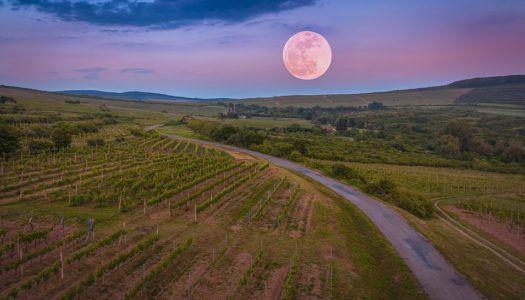A bor filozófusa – 120 éve született Hamvas Béla