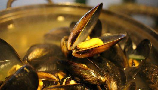 A titokzatos ínyencfalat: 25 tény a kagylóról
