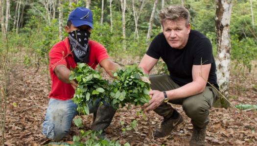 Gordon Ramsay: a gasztronómián belül virágzik a kokainbiznisz