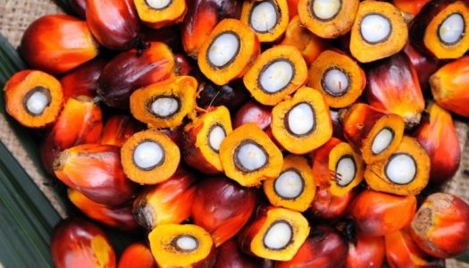 Olajba fulladó trópusok – beszéljünk a pálmaolajról!